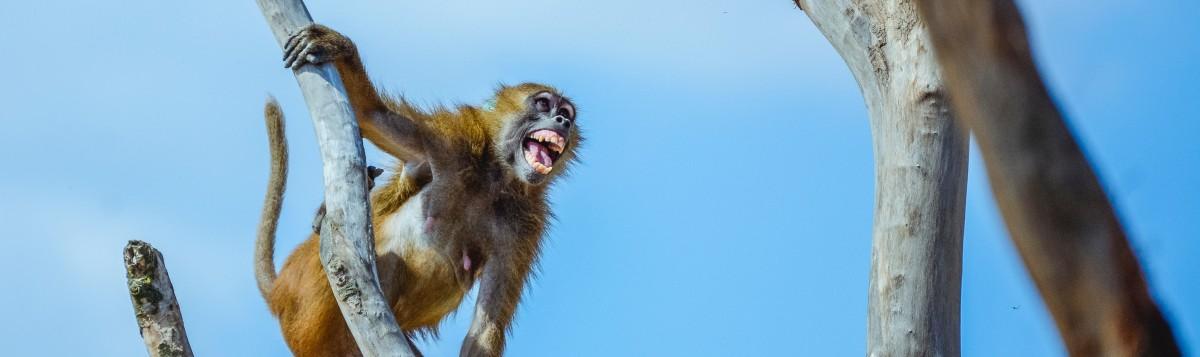 Who Let That Monkey into theCourthouse?