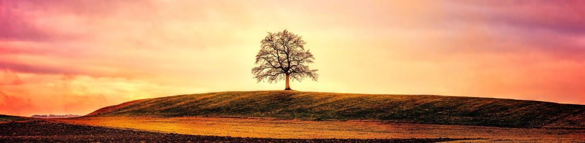 "Mindfulness Apps I Love: ""Oak"""
